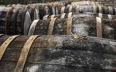 Oak wine casks on vineyard — Stock Photo
