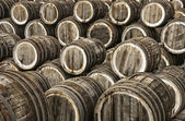 Oak wine casks — Stock Photo