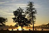 树木在日出 — 图库照片
