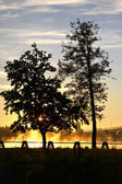 Trees in sunrise — Stock Photo