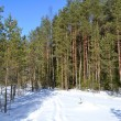 Forest in winter, sunny day — Stock Photo