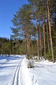 Forest in winter, sunny day — Stockfoto
