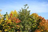 Bright autumn trees — Stock Photo