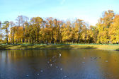 Pond in Summer Garden, St.Petersburg — Stock Photo