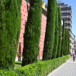Cypress alley near the Salvador Dali Museum — Stock Photo