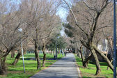 City park in Rimini. — Stock fotografie