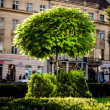 Tree in Lviv — Stock Photo