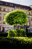 Tree in Lviv — Stock Photo
