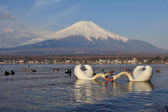 White Swan and Mt Fuji — Stock Photo