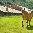 Horse in the village — Stock Photo