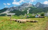 Countriside in Montenegro — Stock Photo