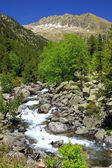 Wild river in mountains — Stock Photo