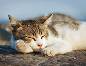 Cat sleeping — Stock Photo