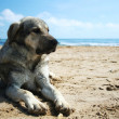 Dog on the beach — Stock Photo