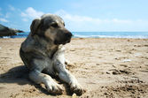 Dog on the beach — Photo