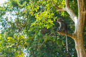 Monkey in a forest — Stock Photo