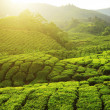 Stock Photo: Cameron Highlands