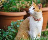 Cute ginger cat — Stock Photo