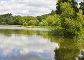 Jezioro z lasu — Zdjęcie stockowe