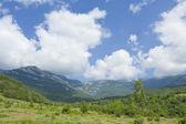 小山和树 — 图库照片