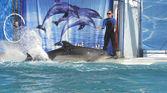 Dolfijn — Stockfoto