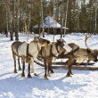 Carriage with deers — ストック写真