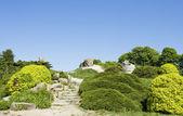 Japanese garden — Stock Photo