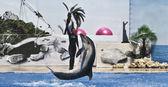 Dolphin och tränare — Stockfoto