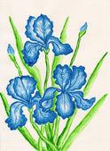 Three dark blue irises — Stock Photo
