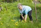Old lady working in garden — Stock Photo