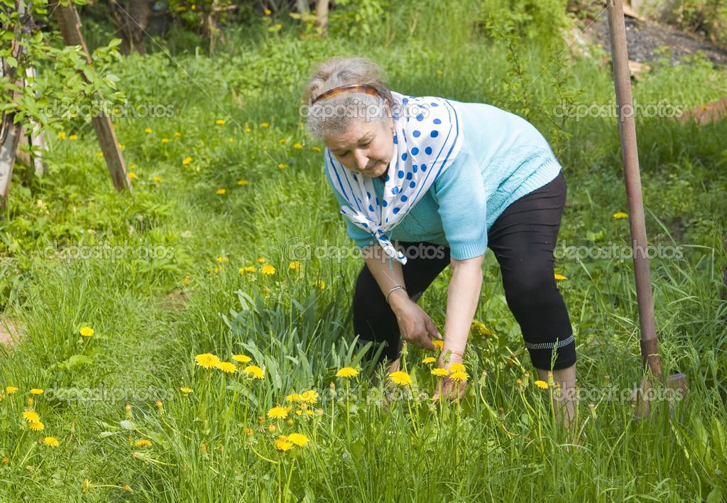 old lady working in garden stock photo afonskaya 21377375. Black Bedroom Furniture Sets. Home Design Ideas