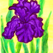 Violet iris, painting - Stock Photo