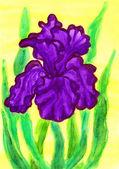 Violet iris, painting — Stock Photo