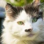 Head of cat — Stock Photo #32657559