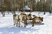 Carriage with deers — Stock Photo