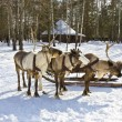 Carriage with deers — Stock Photo #33059115