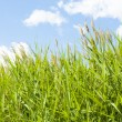 Grass and sky — Stock Photo #33955153