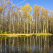 Autumn birch forest and water — Stock Photo