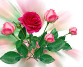 Roses bouqet — Stock Photo