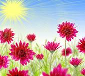 Flower blossom — Stock Photo