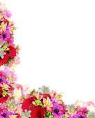 Migliore sfondo romantico fiore — Foto Stock