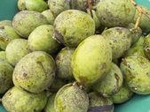 Horse Mango Fruits — Stock Photo