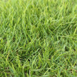 Stock Photo: Green grass field