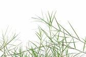 Bermuda grass — Стоковое фото