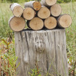 Stock Photo: Pile of logs on stumpy
