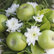 Stock Photo: Flowers and apples arrangement