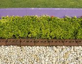 Roślina na skale kamień — Zdjęcie stockowe