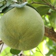 Pomelo — Stock Photo #25163823