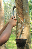 Rubber tapping — 图库照片
