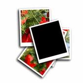 Leere foto frame und mohn-blume, isoliert auf weißem hintergrund — Stockfoto